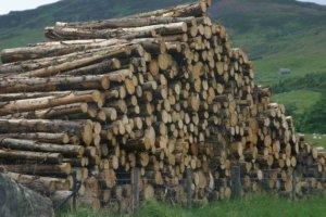 wood in uk