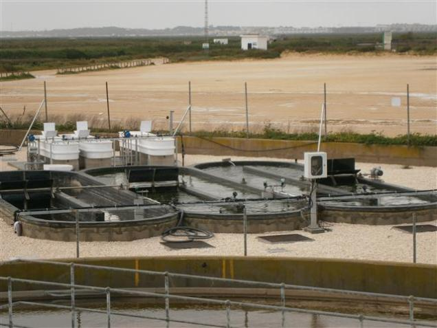 The raceways located at the Chiclana WWTP (march 2013)